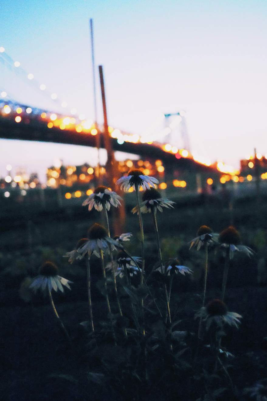Flowers beneath the Manhattan Bridge
